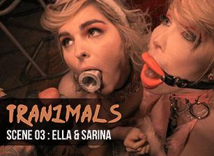 TS Ella + TS Sarina + Stud = Threesome
